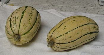 English: A picture of delicata squash taken by...