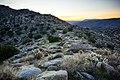 Desert Sunrise II (13496530453).jpg