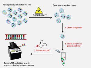 MALBAC - Detection of drug resistance genes using MALBAC