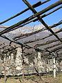 Dettaglio pergole terrazzamenti della vite Donnas 1.JPG