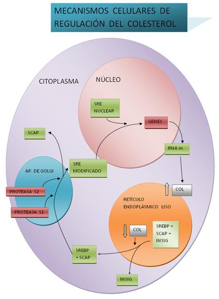 los ciclos de esteroides son malos