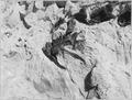 Dinosaur fossil - NARA - 286020.tif