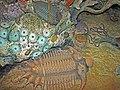 Diorama of a Devonian seafloor - trilobites, corals (44929141324).jpg