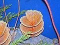 Diorama of a Mississippian seafloor - fenestrate bryozoans, algae (44695542975).jpg