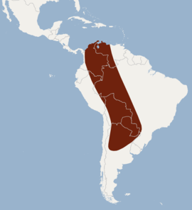 Distribution of Eumops dabbenei.png