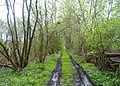 Disused railway by Chartley Moss - geograph.org.uk - 788187.jpg