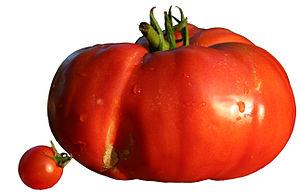 Beefsteak tomato - A cherry tomato and a beefsteak tomato.
