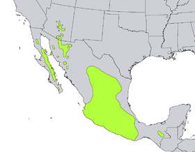 Dodonaea viscosa range map.png