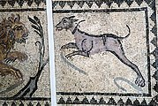 This ancient mosaic, likely Roman, shows a large dog with a collar hunting a lion.