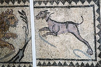Hunting dog - This ancient mosaic, likely Roman, shows a large dog with a collar hunting a lion