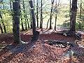 Doline in Steilstufe des Muschelkalks zwischen Bad Berka und Saalborn 11.jpg
