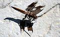 Dragonfly ran-360.jpg