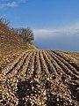 Drewton Wold - geograph.org.uk - 737015.jpg