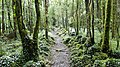 Dromore Wood path.JPG