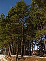 Druvciems - panoramio (92).jpg