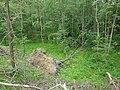 Drzewo osunięte ze skarpy. - panoramio.jpg
