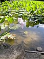 Dscn0524 japan nature.jpg