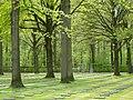 Duitse militaire begraafplaats van Vladslo - 224133 - onroerenderfgoed.jpg
