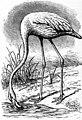 EB1911 - Flamingo.jpg