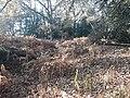 Earthwork enclosures, Oare Common, Berkshire 09.jpg