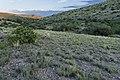 East of Crest Gardens Tank - Flickr - aspidoscelis (1).jpg