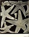 Echinodermes (astéries, ophiures et échinides) (1912) (20950651300).jpg