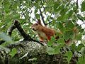 Eichhörnchen 15.08.15 (24).jpg