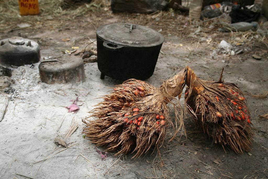 fruit du palmier à huile