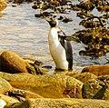 Embracing the sun King Penguin Falkland Islands.jpg
