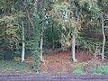 Emmerich Elsepaßweg PM19-09.jpg