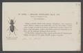 Enceladus - Print - Iconographia Zoologica - Special Collections University of Amsterdam - UBAINV0274 010 13 0010.tif