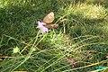 Erebia ligea (Heit. See) (24347716570).jpg
