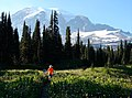 Evan and Adrie Redman hike through wildflower meadow (Bistort) on Lakes Trail. Mt Rainier. (505d986e493e420197fc2bd0df006b93).JPG