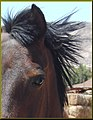 Eye of a Horse, Pioneertown, CA 4-13-13c (8698471827).jpg