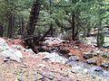 Fairy Meadows -Nanga Parbat Base Camp52.jpg