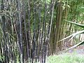 Fale - Giardini Botanici Hanbury in Ventimiglia - 414.jpg