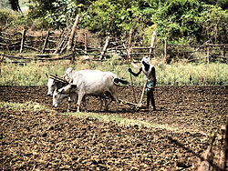 Farming near Nirmal
