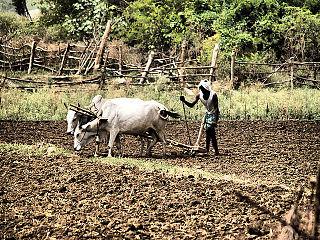 Nirmal district District of Telangana in India