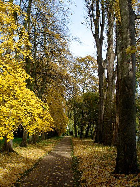 File:Fellows' Garden Path autumn.jpg