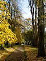 Fellows' Garden Path autumn.jpg