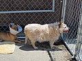 Fence Factory Pet Adoptions - panoramio (3).jpg