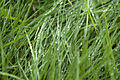Feuchtes Gras.jpg
