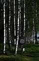 Finland 2015-06-20 (18648997774).jpg