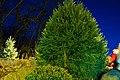 First Annual XMas Tree Lighting - panoramio.jpg