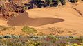 First view of the sand dunes - looking good! (8078515509).jpg