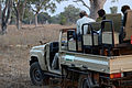 Flickr - ggallice - Safari jeep.jpg