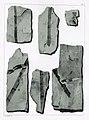 Flora fossilis formationis oolithicae = (Tab. IV) (7294194066).jpg