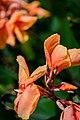 Flora gradient.jpg