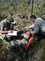 Florida Panther Radio Collaring Research (2), NPSPhoto (9255080331).jpg