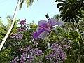 Flowerbed of Orchid.jpg